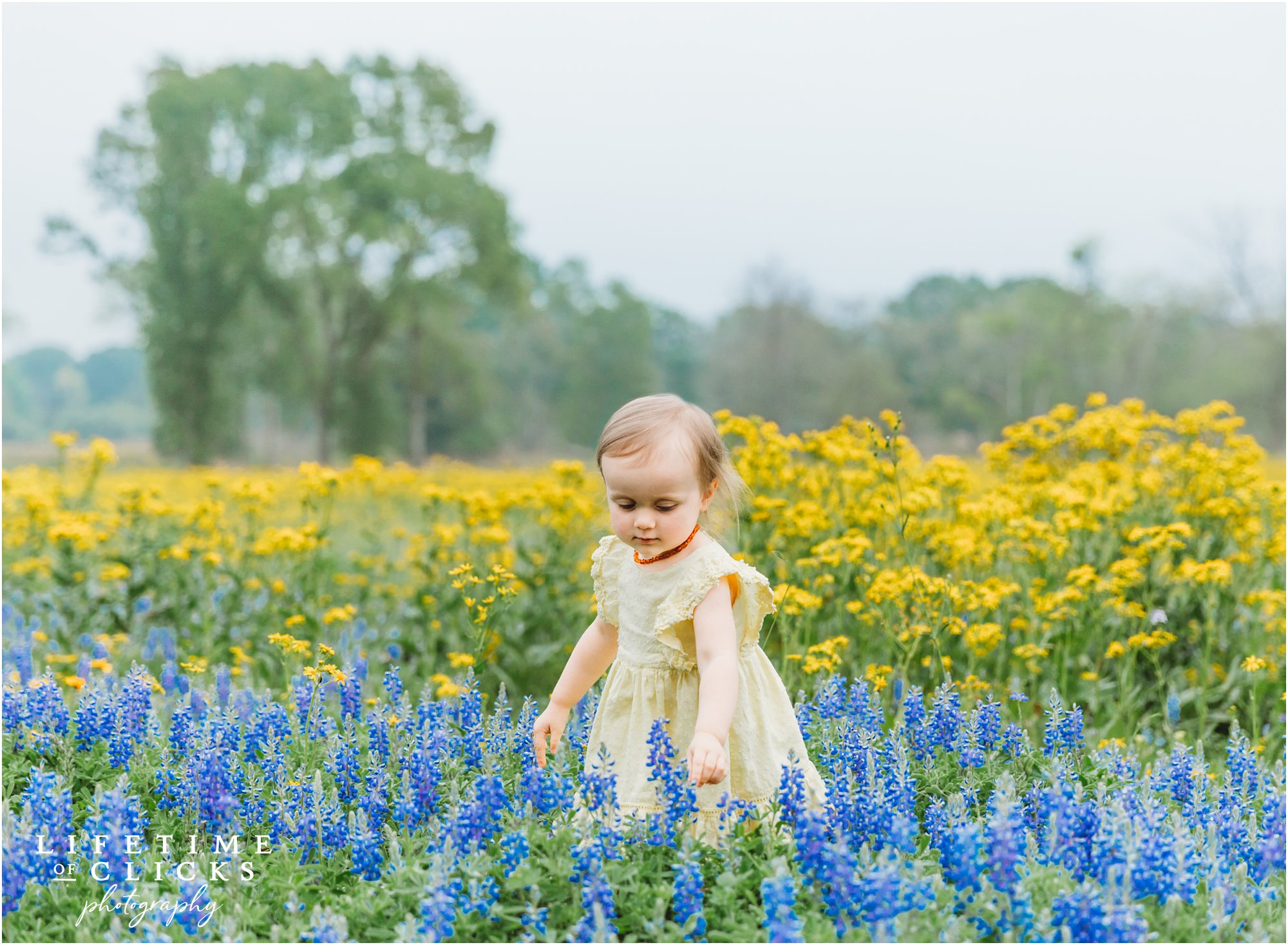 Candid photo of little girl in Bluebonnets